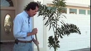 Tim's Tips: Planting Potted Plants