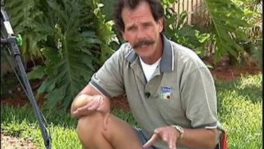 Tim's Tips: Mowing Height