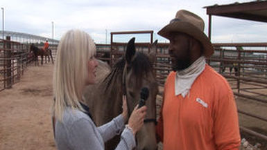 Ep 86 Florence Prison Horses