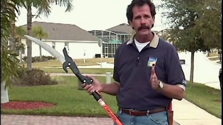 Tim's Tips: Trimming Palm Trees