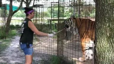 Afton Feeds Andre Tiger