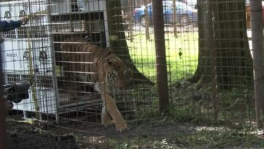 Hoover Tiger Birthday Party
