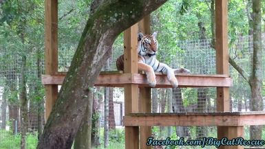 Dutchess looks gorgeous high up on her platform surveying her domain!