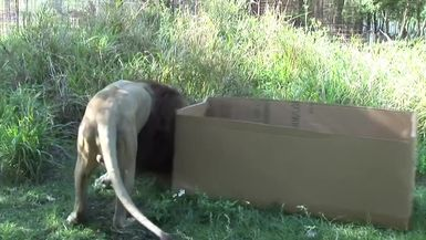 Monday Memories BIG CATS like boxes too!