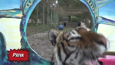Fourth Of July Treats With BIG Cats!