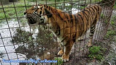 Keisha and Keeper Marie discussing all the rain and flooding at the sanctuary.