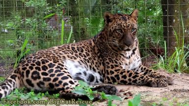 Armani, sitting out in the rain, considers swatting some paper enrichment, but it's a bit too soggy