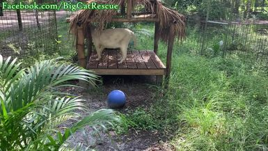 Quick clips of Pharaoh, Smalls, Lakota, Nala, and Zimba!