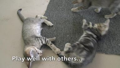 Mothers Day Kittens