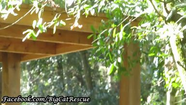 Beautiful Dutchess is hanging out in the shade under her platform!