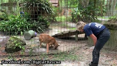 Apollo gets a sicle from Keeper Marie, and we get a peek and this wonderful woman who so loves all