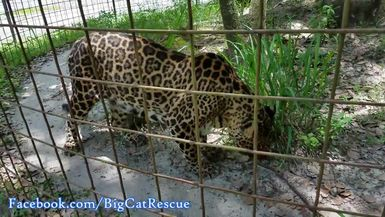 Keeper Marie is smitten with Armani's eyes, but Armani only has eyes for her sicle!
