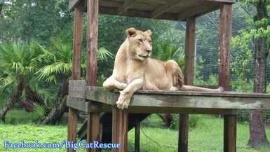 Queen Nikita is observing her royal subjects from atop her platform!
