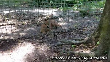 Cyrus Caracal is smiling at Keeper Marie