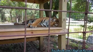 Simba must be having a really good dream. He doesn't want to wake up!