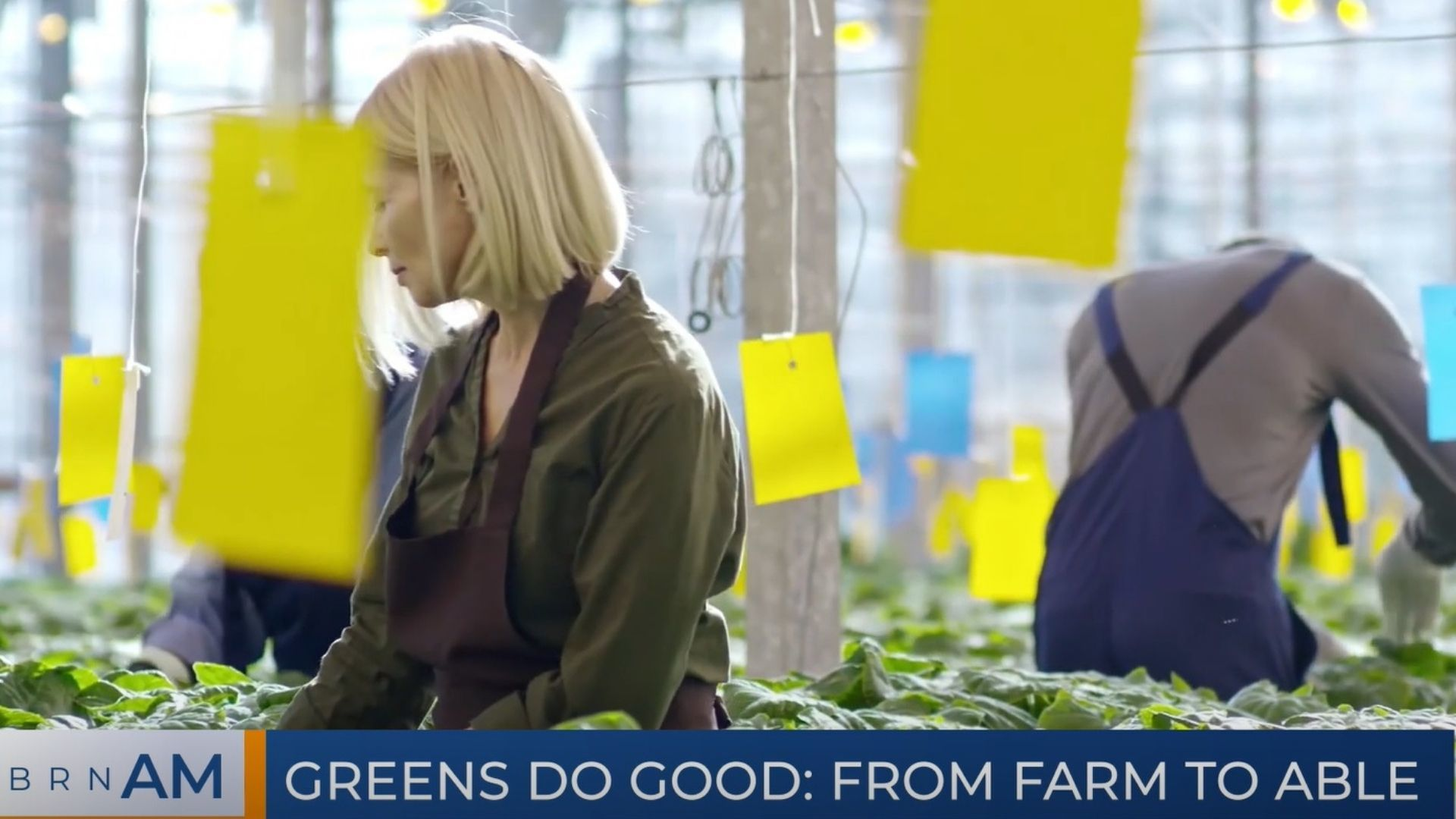 BRN AM   Greens Do Good: From farm to Able