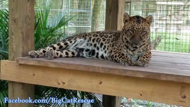Armani relaxing on her platform while waiting for the rain to come.