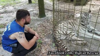 Sapphire Tiger 'playing' with Intern Dylan