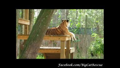 Dutchess hanging out atop her platform observing everything going on around her!
