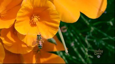 Healing Moment: Bee's (2:08)