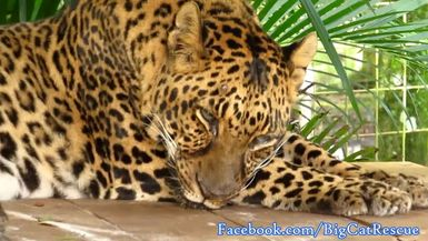 Armani is sleeping on her platform. Aren't her spots gorgeous?