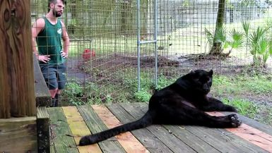 Black Leopard, Jinx, and one of his favorite keepers, Trevor.