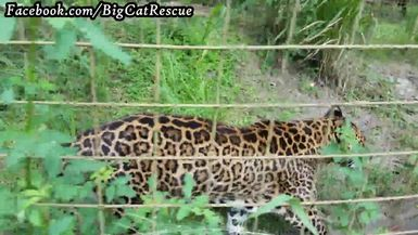 Armani is walking and talking with Keeper Marie!