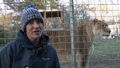 Big Cats And Cold Weather