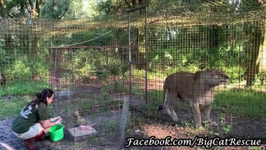 """Keeper Victoria brought Nikita her royal breakfast. The Queen has definitely perfected the """"chicken"""