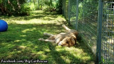 Nikita is enjoying a relaxing day while her royal servants clean the queen's palace.