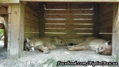 Brothers Ares and Orion are so handsome they don't really need any beauty sleep