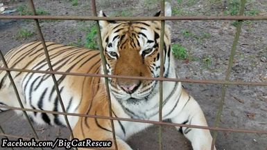 Keeper Marie is in love with Kali's cute face!