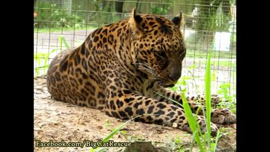 The gorgeous Armani must have had a big breakfast. She can barely keep her eyes open!