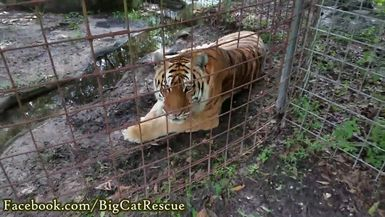 Kali hanging out by the drainage trench talking to Keeper Marie!