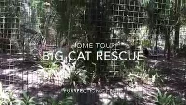 Big Cat Rescue Home Tour: Purr-fection Ocelot