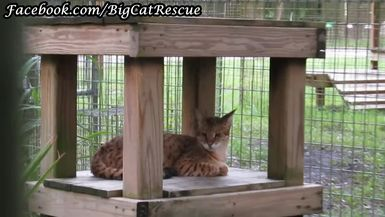 Diablo Savannah Cat is very unfriendly and is very food aggressive, so we don't see him very often,