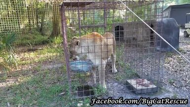 Nikita Lion says it is too hot to eat the rest of her breakfast.