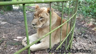 Nikita needs a nap after breakfast! Marie sees a booboo to report to the vet.