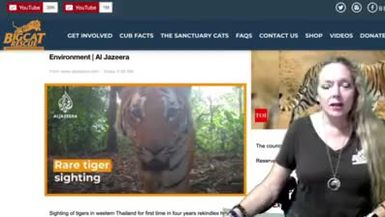 Big Cat Briefing 08 04 2020