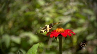 Healing Moment with Judy Brooks - Butterflies (2:25)