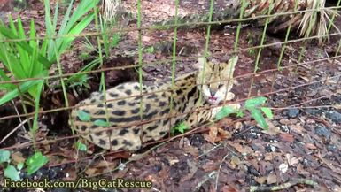 Illithia Serval and her beautiful eyes are enjoying her turn in Funcation!