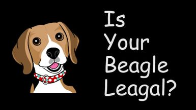 Is Your Beagle legal ft. Rod Baker