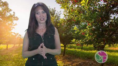 PLUMBTALK TV - MAD MOTIVATION - SHAKE THAT TREE