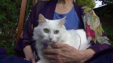 Animal Communicator Sharon Callahan (6:20)