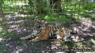 Jasmine doesn't quite have her keepers fully trained.