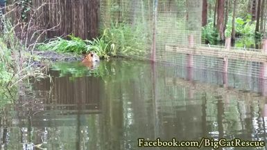 Marie captured Dutchess and Priya eyeing each other at Tiger Lake!
