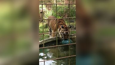 Kali Tiger showing off her goofiness and power!