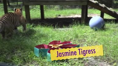 Summer Fun With BIG Cats