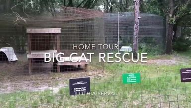 Illithia Serval Home Tour