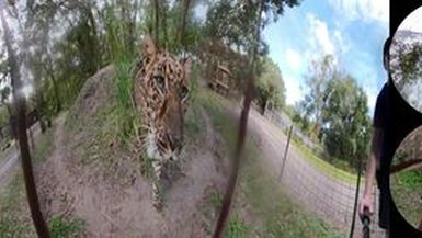 360 VR Armani Leopard - Lesson Learned